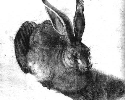 Le lapin l'avait prédit